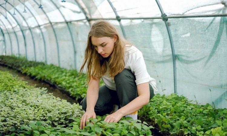 9 Plants that thrive during the monsoon season: Get gardening!